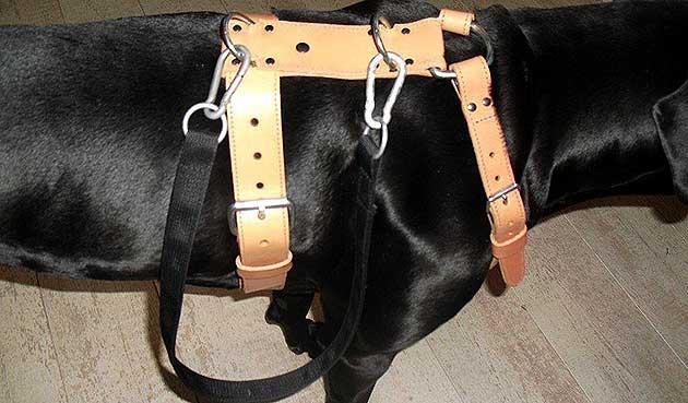 hondentuig op maat gemaakt met aanlijnband