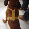 Honden-tuig op maat!